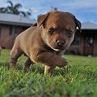 Puppy. by Dejezza