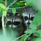 Shhhh...be quiet! Maybe she won't see us..... by Ruth Lambert