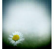 little  daisy Photographic Print