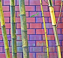 Bamboo and Bricks by Ethna Gillespie