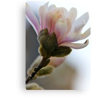 Flowering Blossoms Canvas Print