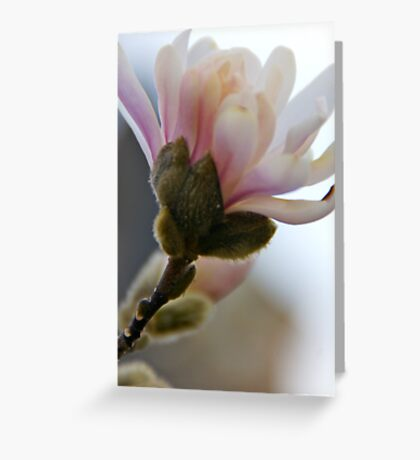 Flowering Blossoms Greeting Card