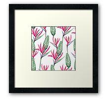 Pink strelitzia Framed Print