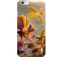 Lone Weed in the Sun iPhone Case/Skin