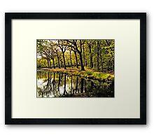 HDR Forest Framed Print