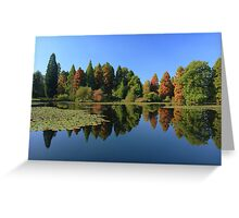 Bedgebury Pinetum during the Autumn. Greeting Card