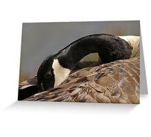 Canada goose, Mud Lake, Ottawa, Ontario Greeting Card