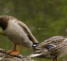 Waterfowl, Mud Lake, Ottawa, Ontario Sticker