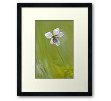 -Sweet White Violet- Framed Print