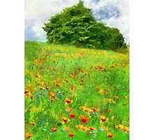 Hillside With Flowers And Trees Photographic Print