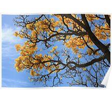 Golden Spring Break - University of Hawaii at Manoa Poster