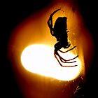 Arachnophobia by Alex Boros