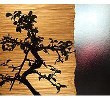 Bonsai Photographic Print