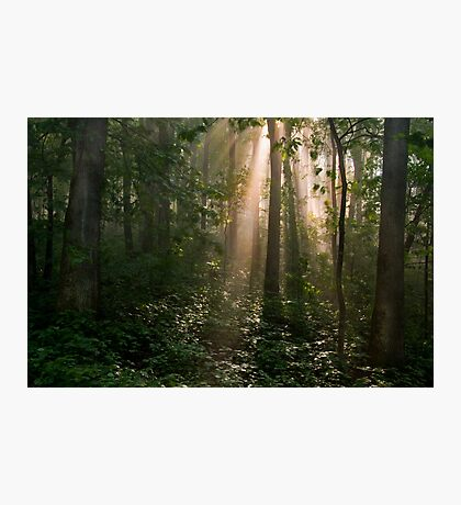 Early Morning  Photographic Print