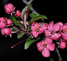 Evening Blossoms by Jodie Keefe