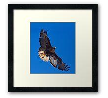 Dark Morph Red Tailed Hawk Framed Print