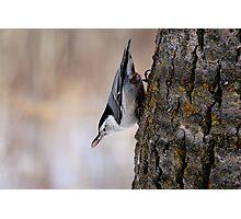 Defy Gravity - Elk Island National Park Photographic Print