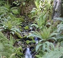 Mountain Stream with Ferns and Sunlight by Stacey Lynn Payne