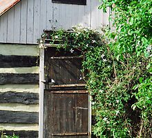Country Door by Laurel Haarer