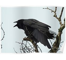 Cawing Crow Poster