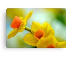 Tiny Yellow Daffodils Canvas Print