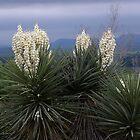 Yucca Tree in Burnet Texas by BrigitteinTexas
