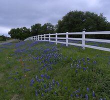 White Fence and Texas Bluebonnets by BrigitteinTexas