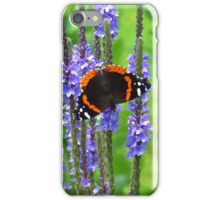 The Admiral on Blue Vervain iPhone Case/Skin