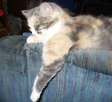 "Calico Cat ""Sweet Pea"" by BingoStar"