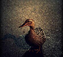 a duck taking a midnight walk by DeadVanity