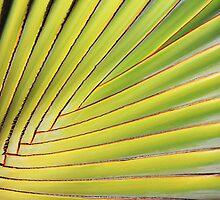 Texture of Green palm Leaf by Atanas Bozhikov NASKO