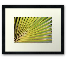 Texture of Green palm Leaf Framed Print