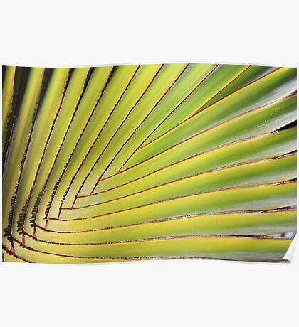 Texture of Green palm Leaf Poster