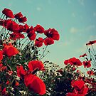 poppies by Suzana Ristic
