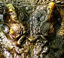 Siamese crocodile stare by Jeremy Cusack