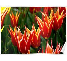 tulip-1 Poster