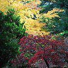 Autumn Colours by Debbie Thatcher by Debbie Thatcher