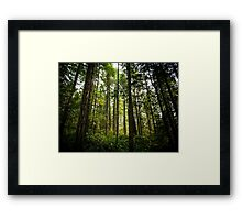 Old Growth Framed Print