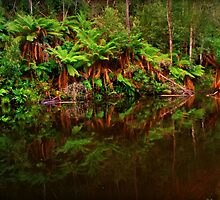 Fern Glade Reserve by Elaine Short
