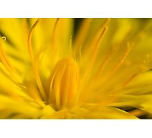 A touch of Yellow Photographic Print