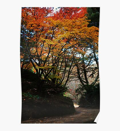 Autumn's Spectacular Colours Poster