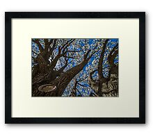 Up the Trunk Framed Print