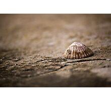 She sells sea shells... Photographic Print