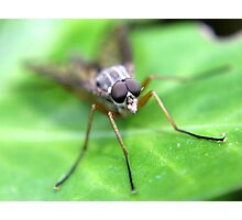Fly On Ivy Leaf Photographic Print