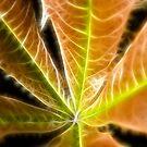 Leaves by fotoholic