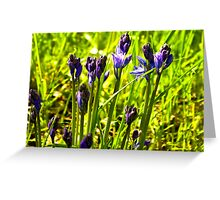 Bluebells Emerging  (late spring) Greeting Card