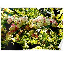Crabapple Blossom #1 Poster