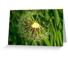 Half-Time   -  Dandelion Clock Greeting Card