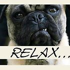 Pug Dog, Relax, Humor by SandraRose