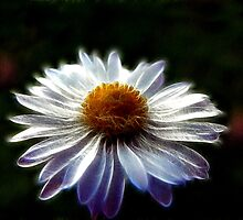 Electric Daisy by saleire